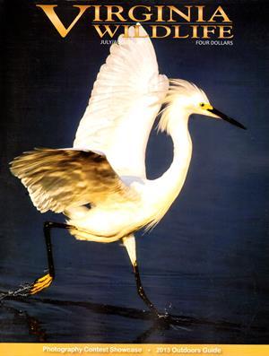 Best Price for Virginia Wildlife Magazine Subscription